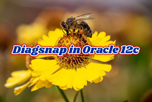Diagsnap in Oracle 12c